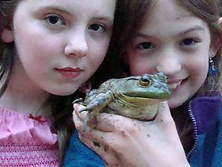 June 1st frog